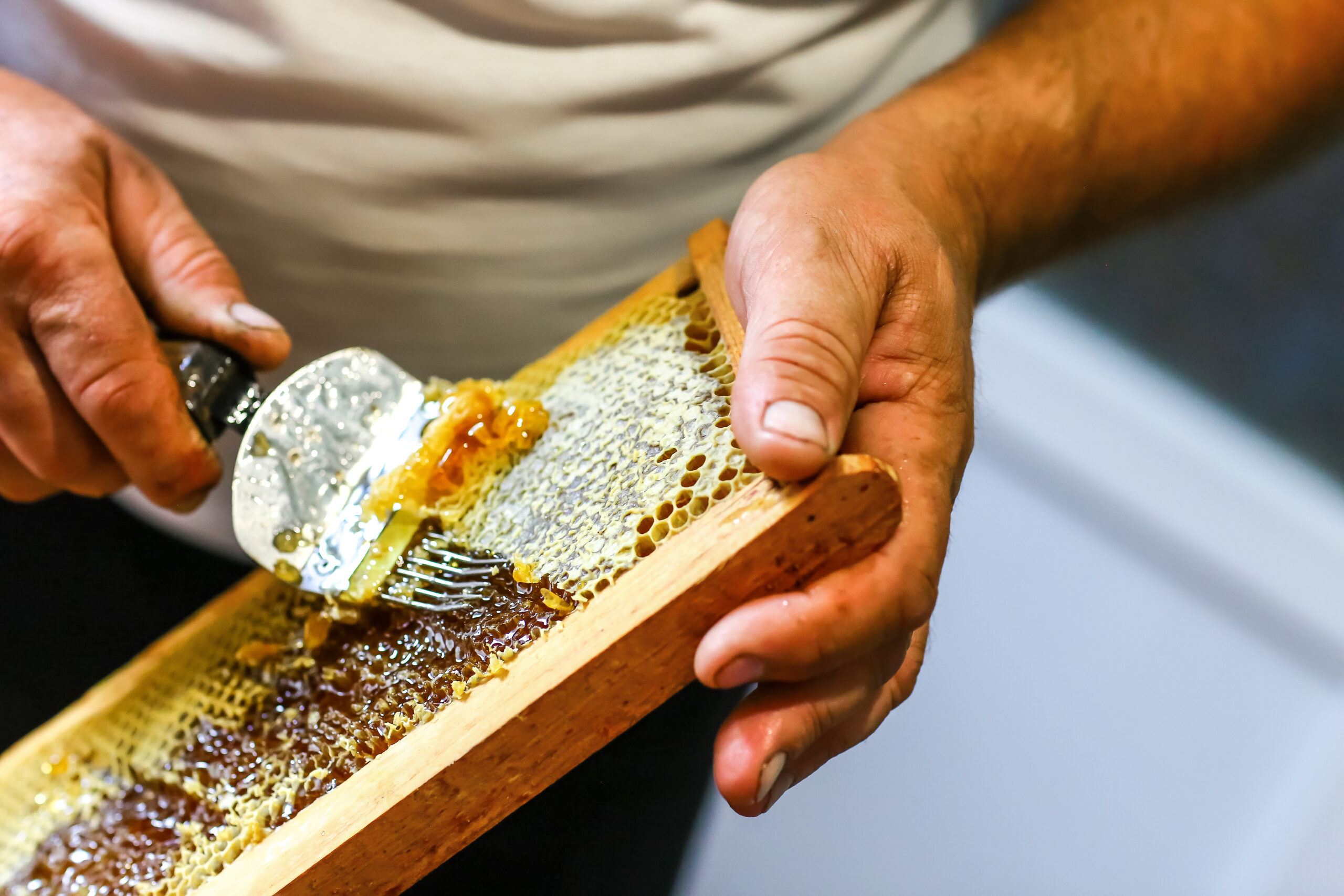 Close-up,Beekeeper,Uncapping,Honeycomb,With,Special,Beekeeping,Fork.,Raw,Honey